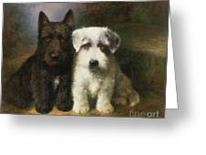 A Scottish And A Sealyham Terrier Greeting Card