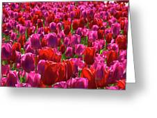 A Sea Of Pinks Greeting Card