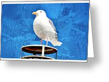 A Seagull Pauses Greeting Card