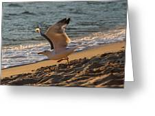 A Seagull Starts His Flight Greeting Card