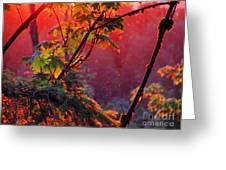 A Season's  Sunset Dusting Greeting Card