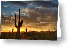 A Serene Sunset In The Sonoran Desert  Greeting Card