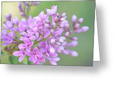 A Shade Of Purple, A Shade Of Spring Greeting Card
