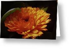 A Shadowed Blossom  Greeting Card