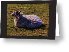A Sheep In Wales Greeting Card