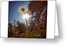 A Shiny Flower Day Greeting Card by Stwayne Keubrick