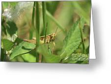 A Shy Grasshopper Greeting Card
