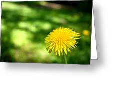 A Single Dandelion Greeting Card