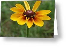 A Single Flower Greeting Card