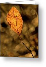 A Single Leaf In The Late Sun Greeting Card