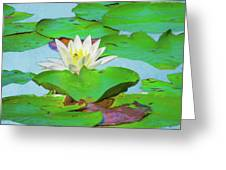 A Single Water Lily Blossom Greeting Card