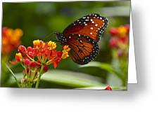 A Sip Of Milkweed Nectar Greeting Card