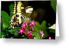 A Sip Of Nectar Greeting Card