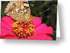 A Sip Of Zinnia Greeting Card