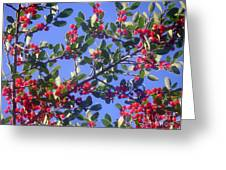 A Sky Full Of Holly Greeting Card