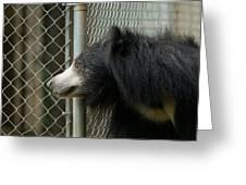 A Sloth Bear Melursus Ursinusat Greeting Card by Joel Sartore