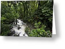 A Small River Flows Through A Dense Greeting Card