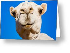 A Smiling Camel Greeting Card