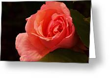 A Soft Rose  Greeting Card