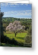 A Solitary Almond Tree Greeting Card