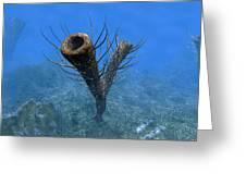 A Species Of Pirania, A Primitive Greeting Card