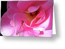 A Spider And A Rose Greeting Card