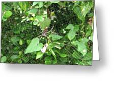 A Spider Web Greeting Card
