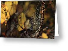 A Spiders Creation Greeting Card