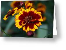 A Splash Of Fall Greeting Card