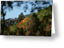 A Spot Of Fall Greeting Card
