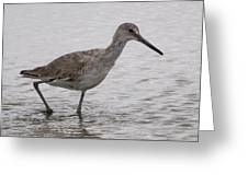 A Spotted Sandpiper Greeting Card
