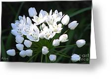 A Spray Of Wild Onions Greeting Card
