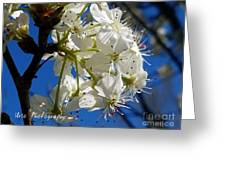 A Spring Delight Greeting Card
