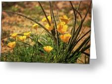 A Spring Morning  Greeting Card