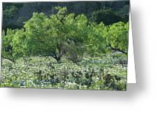 A Spring Scene In Texas. Greeting Card