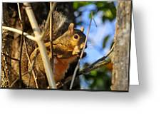 A Squirrel's Feist Greeting Card