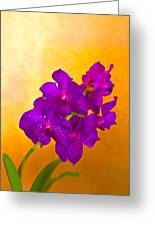 A Study In Orchid Greeting Card