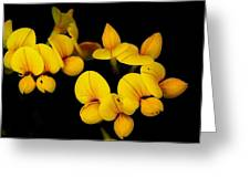 A Study In Yellow Greeting Card