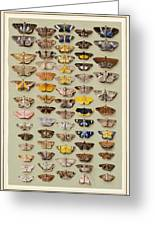 A Study Of Moths Characteristic Of Indo Greeting Card