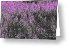 A Suggestion Of Wildflowers Greeting Card