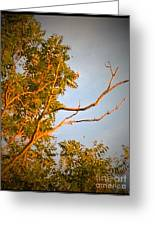 A Sumac Tree And A Bare Branch Greeting Card