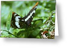 A Summer Butterfly  Greeting Card