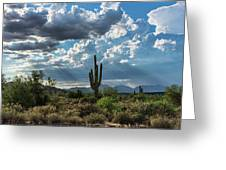 A Summer Day In The Sonoran  Greeting Card
