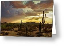 A Summer Evening In The Sonoran  Greeting Card
