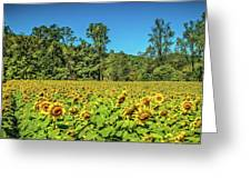 A Sunflower Day Greeting Card