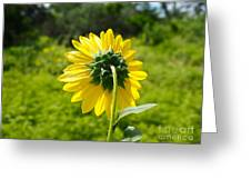 A Sunflower's Backside Greeting Card