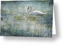 A Swan's Reverie Greeting Card