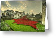 A Sweep Of Poppies  Greeting Card