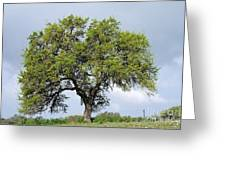 A Tale Of One Tree Greeting Card