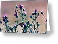 A Thistle Community Greeting Card